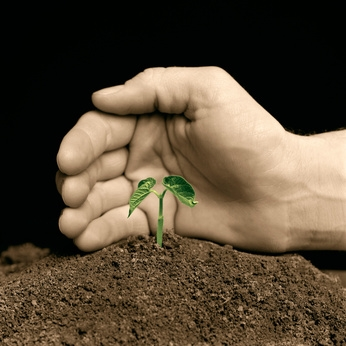 hand protecting a young seedling – hand-colored b/w
